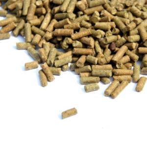 Sedum Nutrition